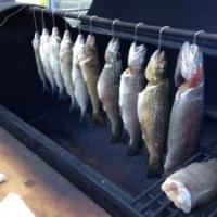 Fische räuchern im Smoker